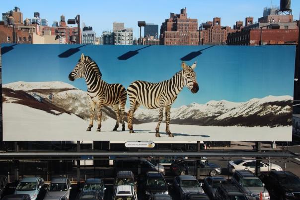 Zebras in Chelsea