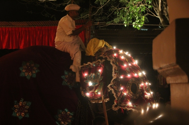 First elephant in the procession