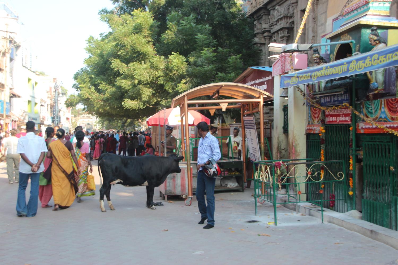 Outside Meenaksi Sundaresvarar Temple, Madurai