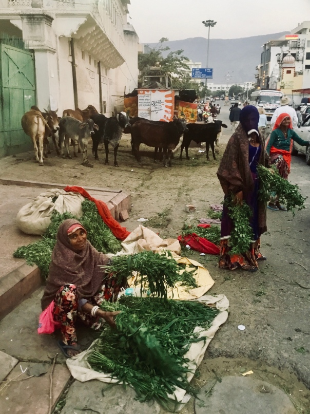 Selling greens to feed to sacred cows, Pushkar, Rajasthan, India